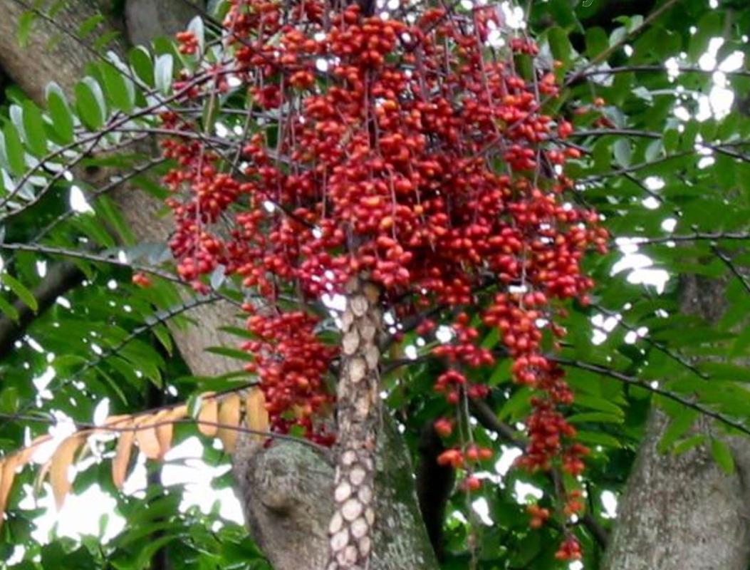 http://naturahealthproducts.files.wordpress.com/2012/07/eurycoma-longifolia.jpg